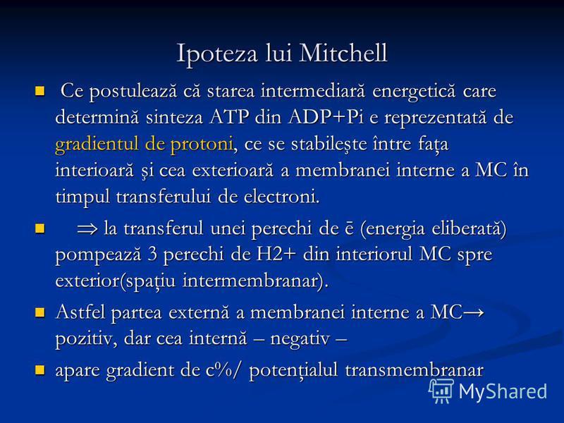 Ipoteza lui Mitchell Ce postulează că starea intermediară energetică care determină sinteza ATP din ADP+Pi e reprezentată de gradientul de protoni, ce se stabileşte între faţa interioară şi cea exterioară a membranei interne a MC în timpul transferul