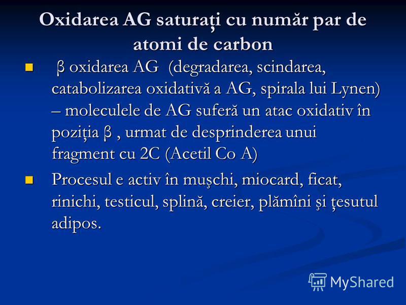 Oxidarea AG saturaţi cu număr par de atomi de carbon β oxidarea AG (degradarea, scindarea, catabolizarea oxidativă a AG, spirala lui Lynen) – moleculele de AG suferă un atac oxidativ în poziţia β, urmat de desprinderea unui fragment cu 2C (Acetil Co