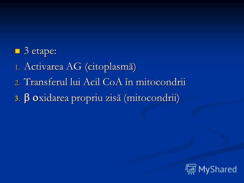3 etape: 3 etape: 1. Activarea AG (citoplasmă) 2. Transferul lui Acil CoA în mitocondrii xidarea propriu zisă (mitocondrii) xidarea propriu zisă (mitocondrii)