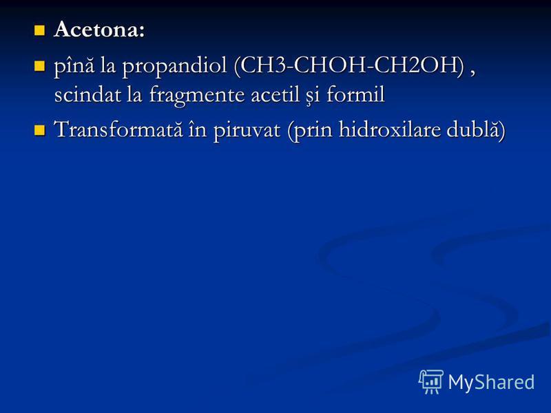 Acetona: Acetona: pînă la propandiol (CH3-CHOH-CH2OH), scindat la fragmente acetil şi formil pînă la propandiol (CH3-CHOH-CH2OH), scindat la fragmente acetil şi formil Transformată în piruvat (prin hidroxilare dublă) Transformată în piruvat (prin hid