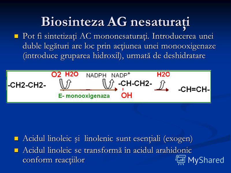 Biosinteza AG nesaturaţi Pot fi sintetizaţi AC mononesaturaţi. Introducerea unei duble legături are loc prin acţiunea unei monooxigenaze (introduce gruparea hidroxil), urmată de deshidratare Pot fi sintetizaţi AC mononesaturaţi. Introducerea unei dub