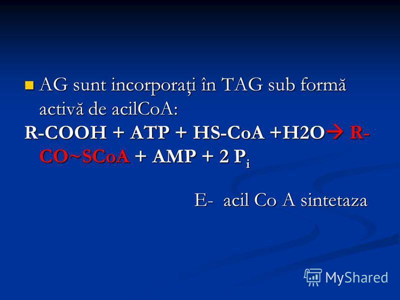 AG sunt incorporaţi în TAG sub formă activă de acilCoA: AG sunt incorporaţi în TAG sub formă activă de acilCoA: R-COOH + ATP + HS-CoA +H2O R- CO~SCoA + AMP + 2 P i E- acil Co A sintetaza E- acil Co A sintetaza