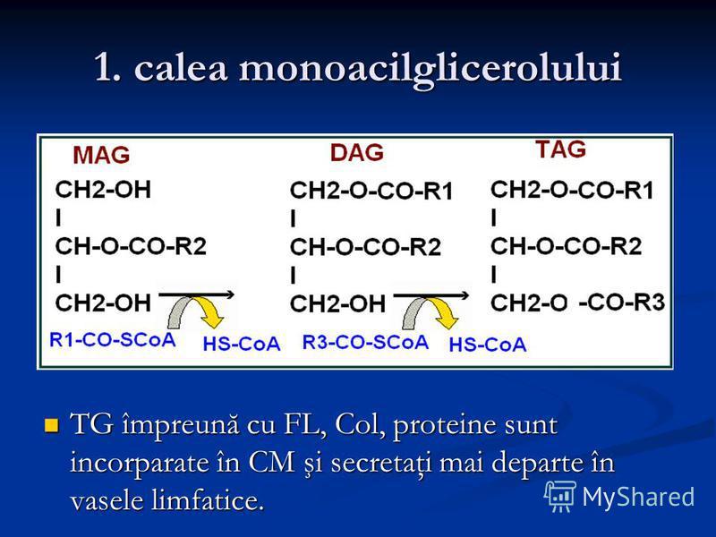 1. calea monoacilglicerolului TG împreună cu FL, Col, proteine sunt incorparate în CM şi secretaţi mai departe în vasele limfatice. TG împreună cu FL, Col, proteine sunt incorparate în CM şi secretaţi mai departe în vasele limfatice.