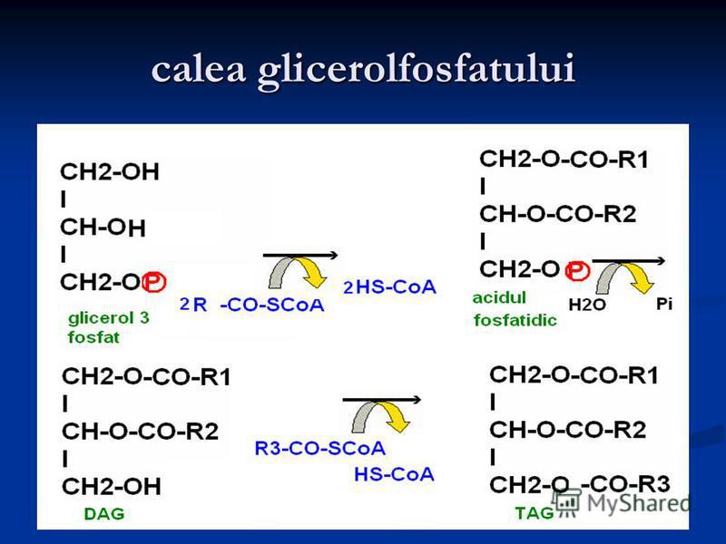 calea glicerolfosfatului