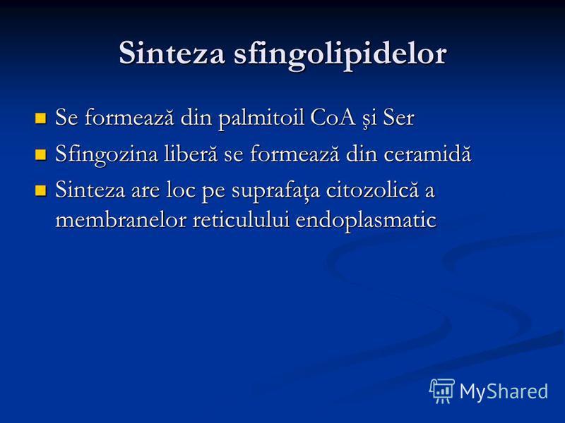 Sinteza sfingolipidelor Se formează din palmitoil CoA şi Ser Se formează din palmitoil CoA şi Ser Sfingozina liberă se formează din ceramidă Sfingozina liberă se formează din ceramidă Sinteza are loc pe suprafaţa citozolică a membranelor reticulului