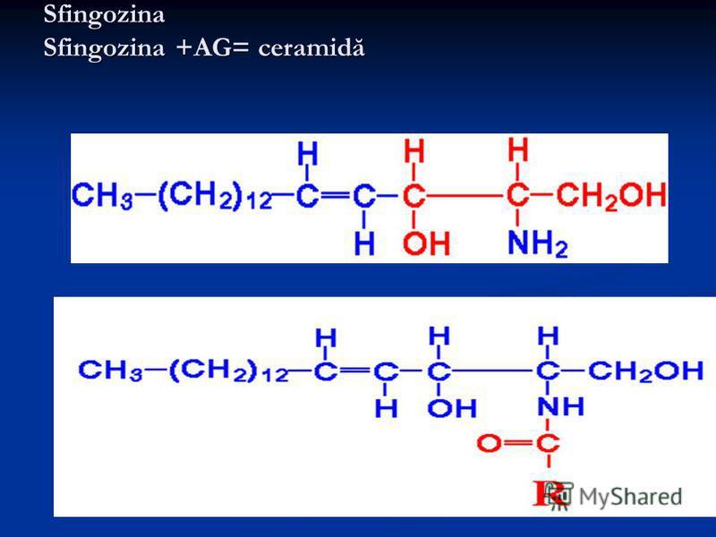 Sfingozina Sfingozina +AG= ceramidă