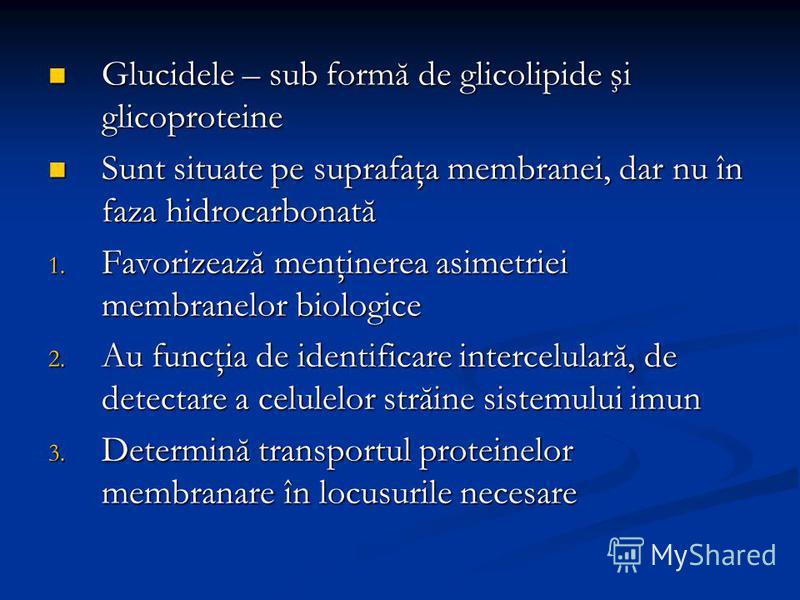 Glucidele – sub formă de glicolipide şi glicoproteine Glucidele – sub formă de glicolipide şi glicoproteine Sunt situate pe suprafaţa membranei, dar nu în faza hidrocarbonată Sunt situate pe suprafaţa membranei, dar nu în faza hidrocarbonată 1. Favor
