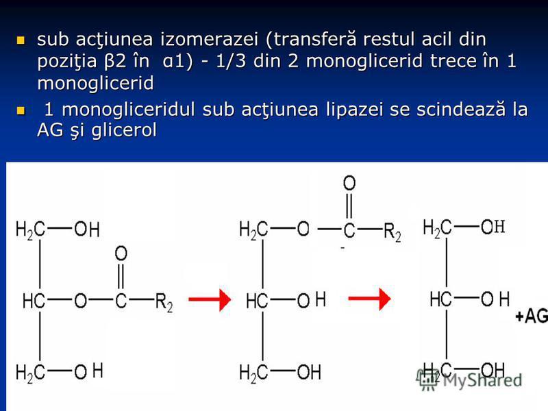 sub acţiunea izomerazei (transferă restul acil din poziţia β2 în α1) - 1/3 din 2 monoglicerid trece în 1 monoglicerid sub acţiunea izomerazei (transferă restul acil din poziţia β2 în α1) - 1/3 din 2 monoglicerid trece în 1 monoglicerid 1 monoglicerid