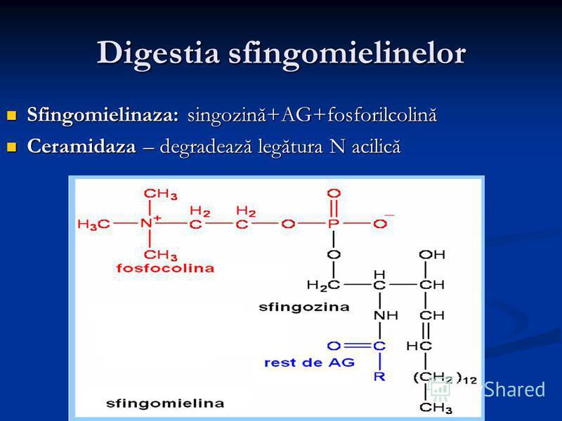 Digestia sfingomielinelor Sfingomielinaza: singozină+AG+fosforilcolină Sfingomielinaza: singozină+AG+fosforilcolină Ceramidaza – degradează legătura N acilică Ceramidaza – degradează legătura N acilică