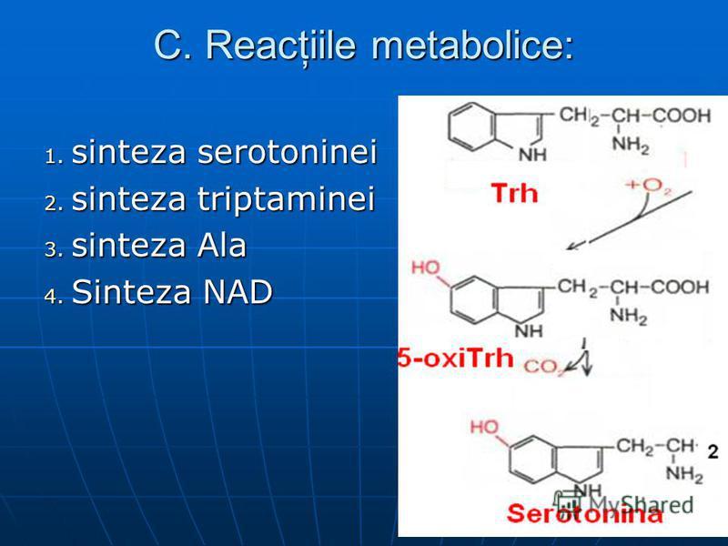 C. Reacţiile metabolice: 1. sinteza serotoninei 2. sinteza triptaminei 3. sinteza Ala 4. Sinteza NAD
