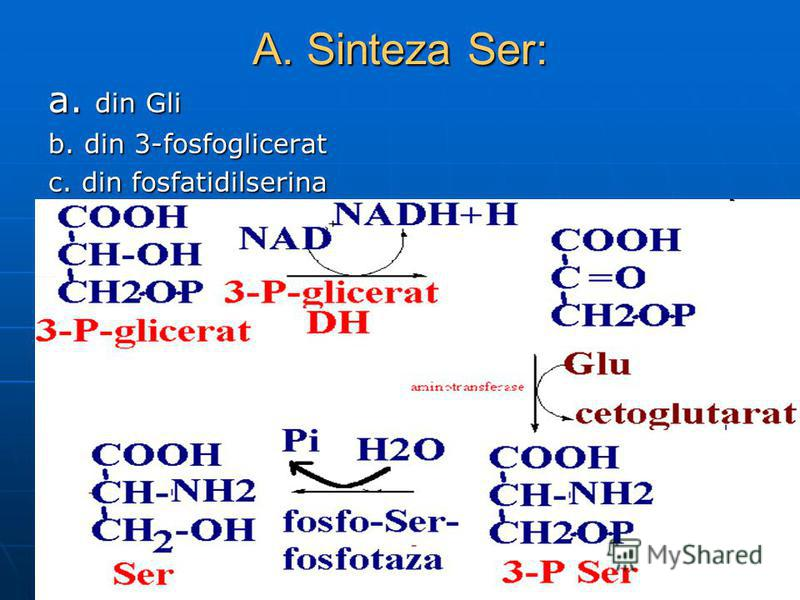 A. Sinteza Ser: a. din Gli b. din 3-fosfoglicerat c. din fosfatidilserina
