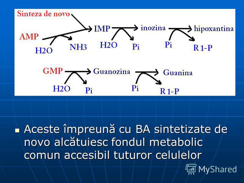 Aceste împreună cu BA sintetizate de novo alcătuiesc fondul metabolic comun accesibil tuturor celulelor Aceste împreună cu BA sintetizate de novo alcătuiesc fondul metabolic comun accesibil tuturor celulelor