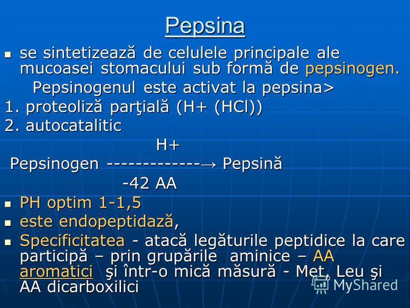 Pepsina se sintetizează de celulele principale ale mucoasei stomacului sub formă de pepsinogen. se sintetizează de celulele principale ale mucoasei stomacului sub formă de pepsinogen. Pepsinogenul este activat la pepsina> Pepsinogenul este activat la
