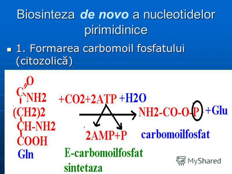 Biosinteza a nucleotidelor pirimidinice Biosinteza de novo a nucleotidelor pirimidinice 1. Formarea carbomoil fosfatului (citozolică) 1. Formarea carbomoil fosfatului (citozolică)