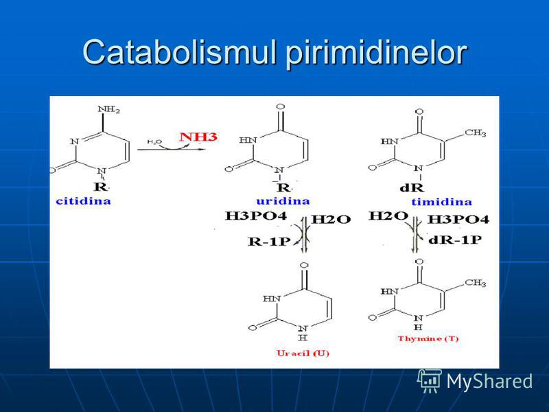 Catabolismul pirimidinelor