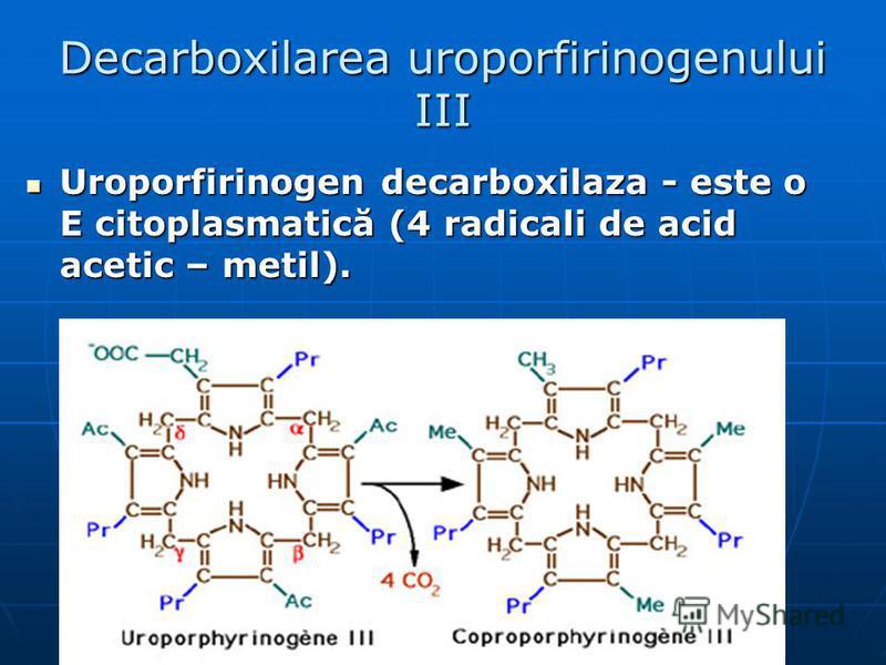Decarboxilarea uroporfirinogenului III Uroporfirinogen decarboxilaza - este o E citoplasmatică (4 radicali de acid acetic – metil). Uroporfirinogen decarboxilaza - este o E citoplasmatică (4 radicali de acid acetic – metil).