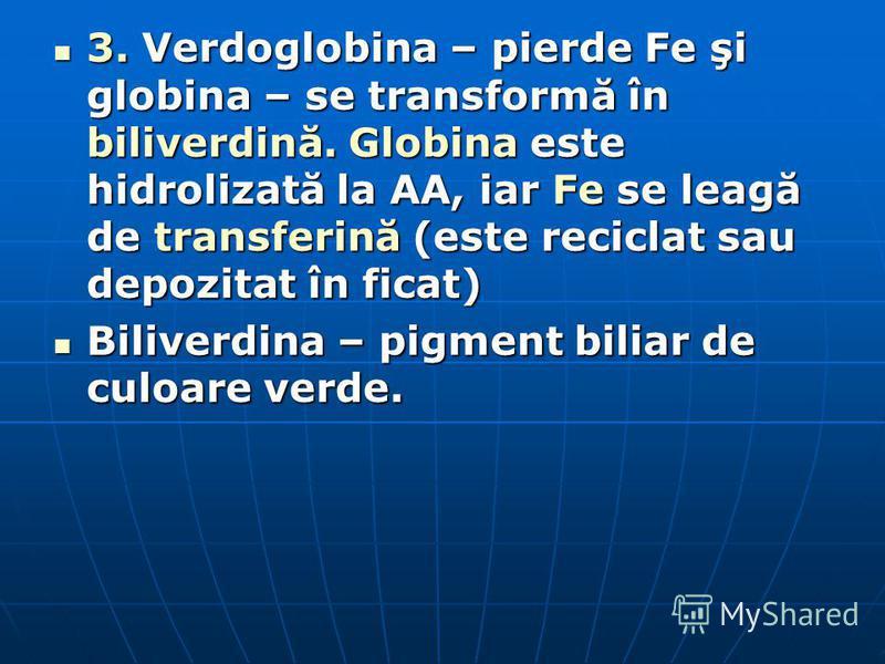 3. Verdoglobina – pierde Fe şi globina – se transformă în biliverdină. Globina este hidrolizată la AA, iar Fe se leagă de transferină (este reciclat sau depozitat în ficat) 3. Verdoglobina – pierde Fe şi globina – se transformă în biliverdină. Globin