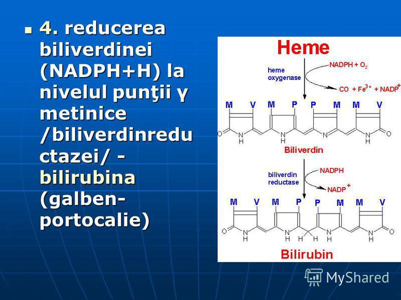 4. reducerea biliverdinei (NADPH+H) la nivelul punţii γ metinice /biliverdinredu ctazei/ - bilirubina (galben- portocalie) 4. reducerea biliverdinei (NADPH+H) la nivelul punţii γ metinice /biliverdinredu ctazei/ - bilirubina (galben- portocalie)
