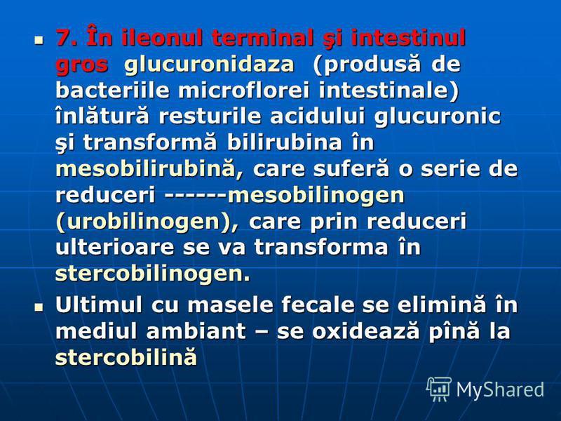 7. În ileonul terminal şi intestinul gros glucuronidaza (produsă de bacteriile microflorei intestinale) înlătură resturile acidului glucuronic şi transformă bilirubina în mesobilirubină, care suferă o serie de reduceri ------mesobilinogen (urobilinog