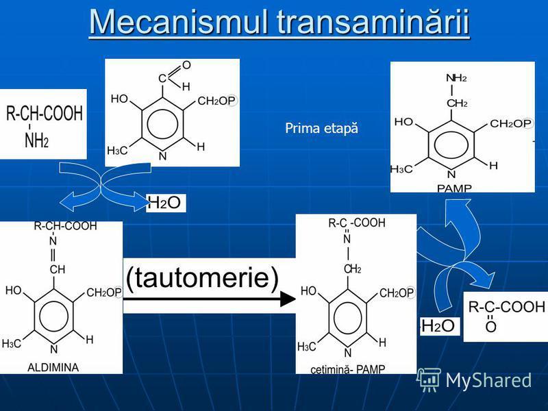 Mecanismul transaminării Prima etapă