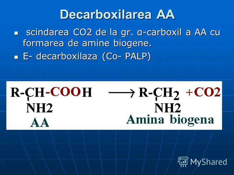 Decarboxilarea AA scindarea CO2 de la gr. α-carboxil a AA cu formarea de amine biogene. scindarea CO2 de la gr. α-carboxil a AA cu formarea de amine biogene. E- decarboxilaza (Co- PALP) E- decarboxilaza (Co- PALP)
