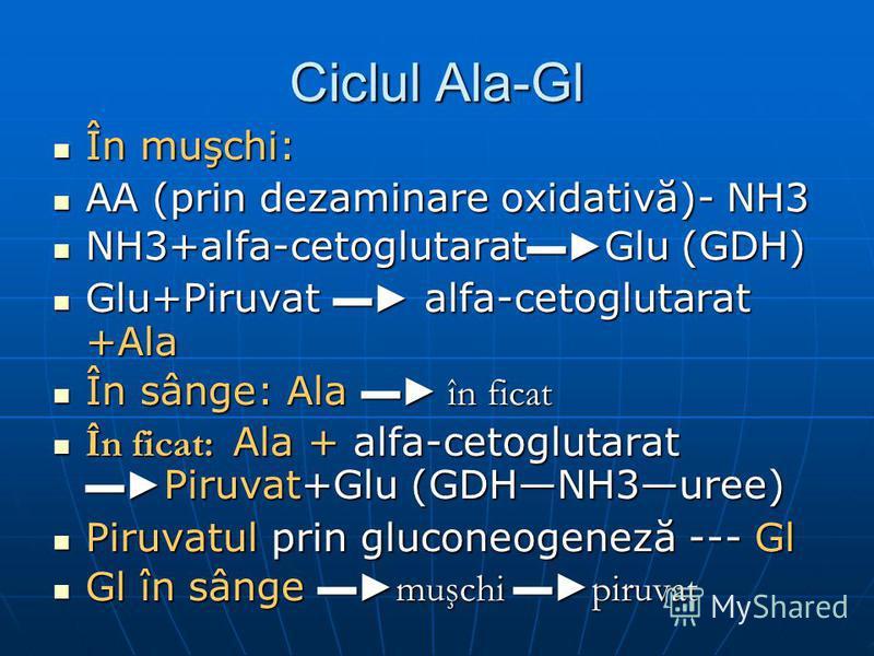 Ciclul Ala-Gl În muşchi: În muşchi: AA (prin dezaminare oxidativă)- NH3 AA (prin dezaminare oxidativă)- NH3 NH3+alfa-cetoglutarat Glu (GDH) NH3+alfa-cetoglutarat Glu (GDH) Glu+Piruvat alfa-cetoglutarat +Ala Glu+Piruvat alfa-cetoglutarat +Ala În sânge