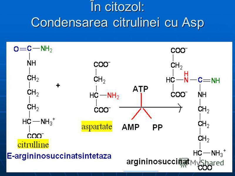 În citozol: Condensarea citrulinei cu Asp