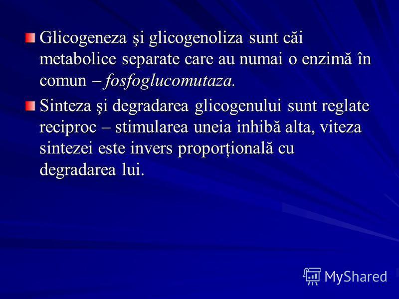Glicogeneza şi glicogenoliza sunt căi metabolice separate care au numai o enzimă în comun – fosfoglucomutaza. Sinteza şi degradarea glicogenului sunt reglate reciproc – stimularea uneia inhibă alta, viteza sintezei este invers proporţională cu degrad