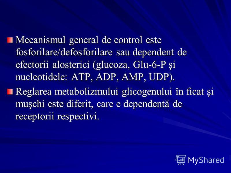 Mecanismul general de control este fosforilare/defosforilare sau dependent de efectorii alosterici (glucoza, Glu-6-P şi nucleotidele: ATP, ADP, AMP, UDP). Reglarea metabolizmului glicogenului în ficat şi muşchi este diferit, care e dependentă de rece