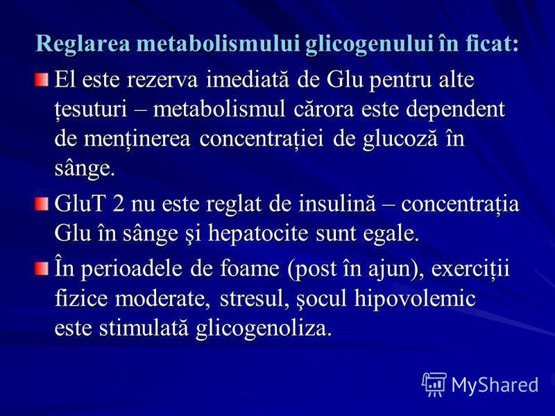 Reglarea metabolismului glicogenului în ficat: El este rezerva imediată de Glu pentru alte ţesuturi – metabolismul cărora este dependent de menţinerea concentraţiei de glucoză în sânge. GluT 2 nu este reglat de insulină – concentraţia Glu în sânge şi