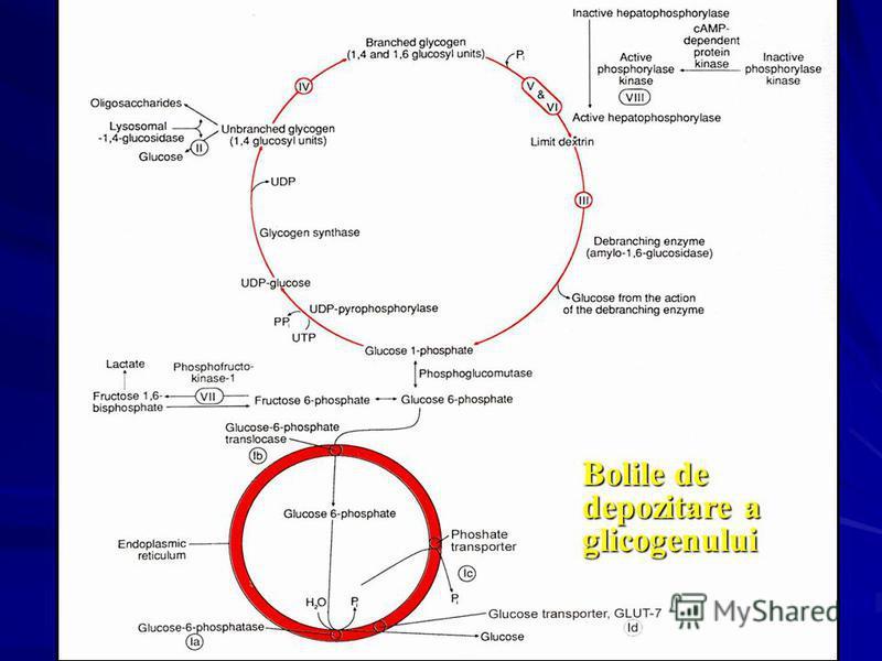 Bolile de depozitare a glicogenului