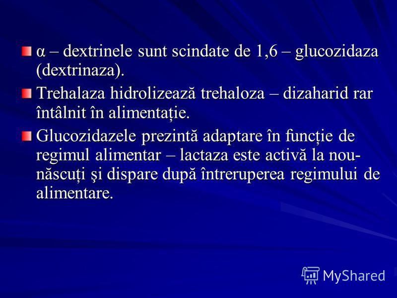 α – dextrinele sunt scindate de 1,6 – glucozidaza (dextrinaza). Trehalaza hidrolizează trehaloza – dizaharid rar întâlnit în alimentaţie. Glucozidazele prezintă adaptare în funcţie de regimul alimentar – lactaza este activă la nou- născuţi şi dispare