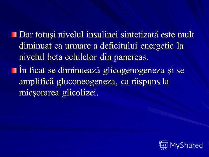 Dar totuşi nivelul insulinei sintetizată este mult diminuat ca urmare a deficitului energetic la nivelul beta celulelor din pancreas. În ficat se diminuează glicogenogeneza şi se amplifică gluconeogeneza, ca răspuns la micşorarea glicolizei.