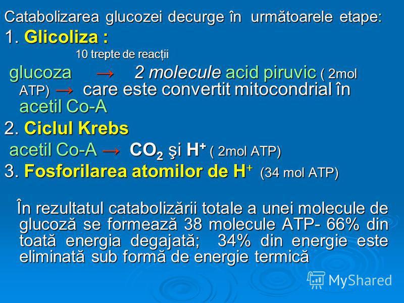 Catabolizarea glucozei decurge în următoarele etape: 1. Glicoliza : 10 trepte de reacţii 10 trepte de reacţii glucoza 2 molecule acid piruvic ( 2mol ATP) care este convertit mitocondrial în acetil Co-A glucoza 2 molecule acid piruvic ( 2mol ATP) care