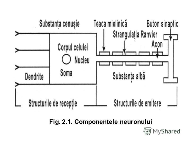 Fig. 2.1. Componentele neuronului