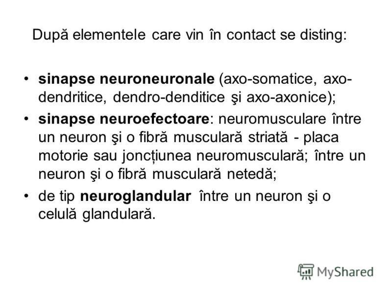După elementele care vin în contact se disting: sinapse neuroneuronale (axo-somatice, axo- dendritice, dendro-denditice şi axo-axonice); sinapse neuroefectoare: neuromusculare între un neuron şi o fibră musculară striată - placa motorie sau joncţiune
