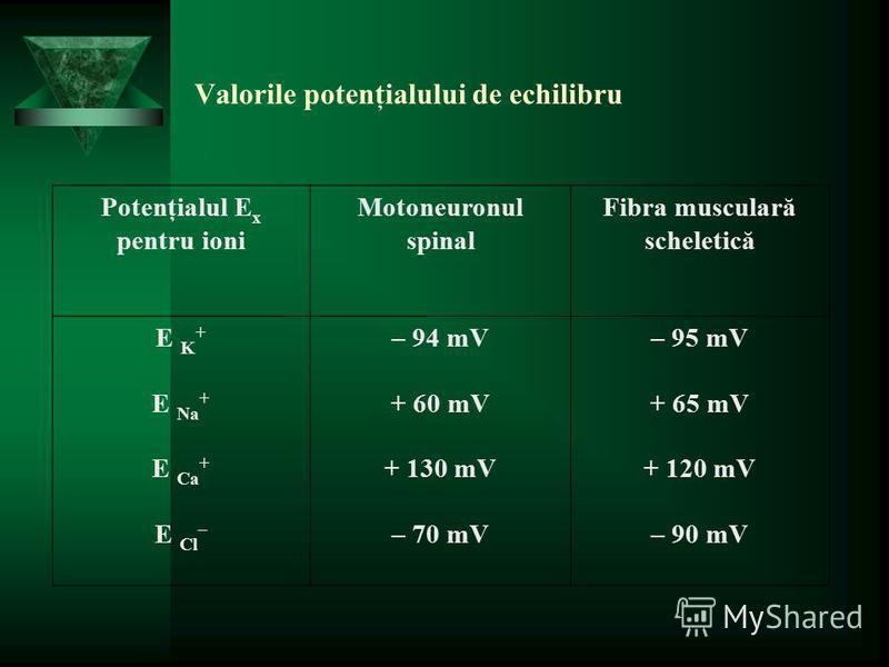 Valorile potenţialului de echilibru Potenţialul E x pentru ioni Motoneuronul spinal Fibra musculară scheletică E K + E Na + E Ca + E Cl – – 94 mV + 60 mV + 130 mV – 70 mV – 95 mV + 65 mV + 120 mV – 90 mV