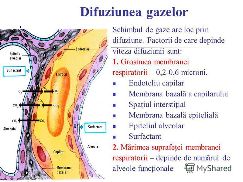 Difuziunea gazelor Schimbul de gaze are loc prin difuziune. Factorii de care depinde viteza difuziunii sunt: 1. Grosimea membranei respiratorii – 0,2-0,6 microni. Endoteliu capilar Membrana bazală a capilarului Spaţiul interstiţial Membrana bazală ep