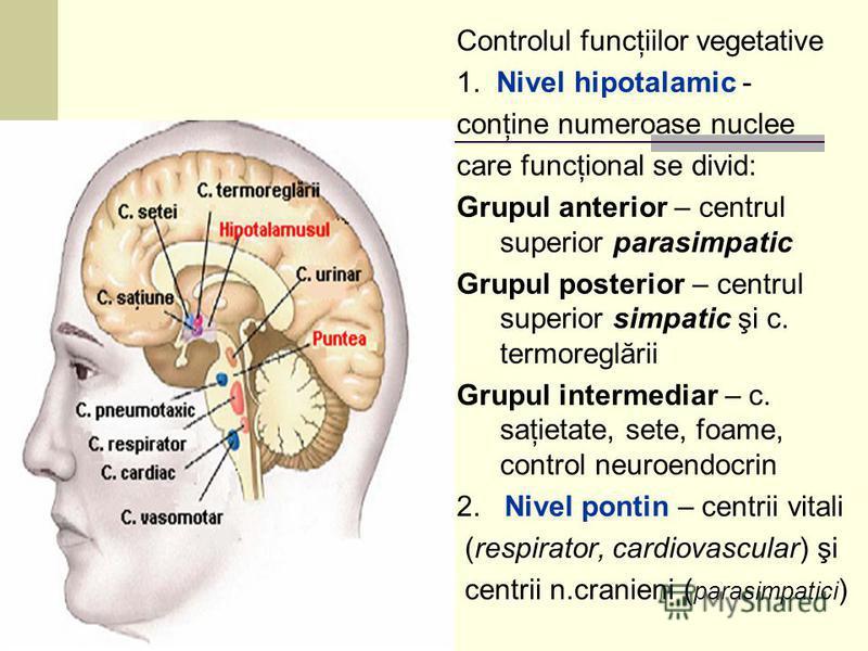 Controlul funcţiilor vegetative 1. Nivel hipotalamic - conţine numeroase nuclee care funcţional se divid: Grupul anterior – centrul superior parasimpatic Grupul posterior – centrul superior simpatic şi c. termoreglării Grupul intermediar – c. saţieta