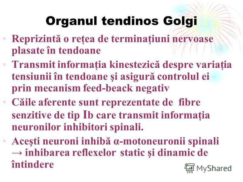 Organul tendinos Golgi Reprizintă o reţea de terminaţiuni nervoase plasate în tendoane Transmit informaţia kinestezică despre variaţia tensiunii în tendoane şi asigură controlul ei prin mecanism feed-beack negativ Căile aferente sunt reprezentate de