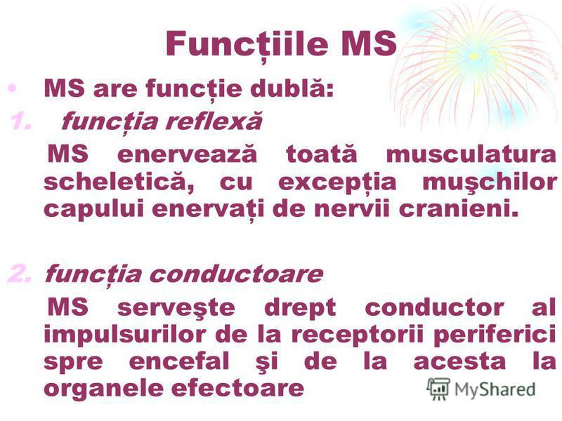 Funcţiile MS MS are funcţie dublă: 1. funcţia reflexă MS enervează toată musculatura scheletică, cu excepţia muşchilor capului enervaţi de nervii cranieni. 2.funcţia conductoare MS serveşte drept conductor al impulsurilor de la receptorii periferici