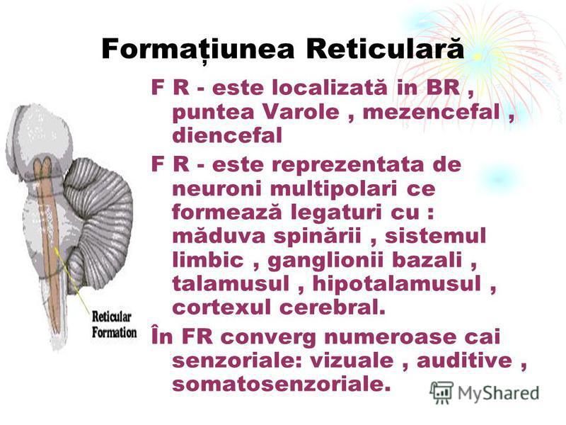 Formaţiunea Reticulară F R - este localizată in BR, puntea Varole, mezencefal, diencefal F R - este reprezentata de neuroni multipolari ce formează legaturi cu : măduva spinării, sistemul limbic, ganglionii bazali, talamusul, hipotalamusul, cortexul
