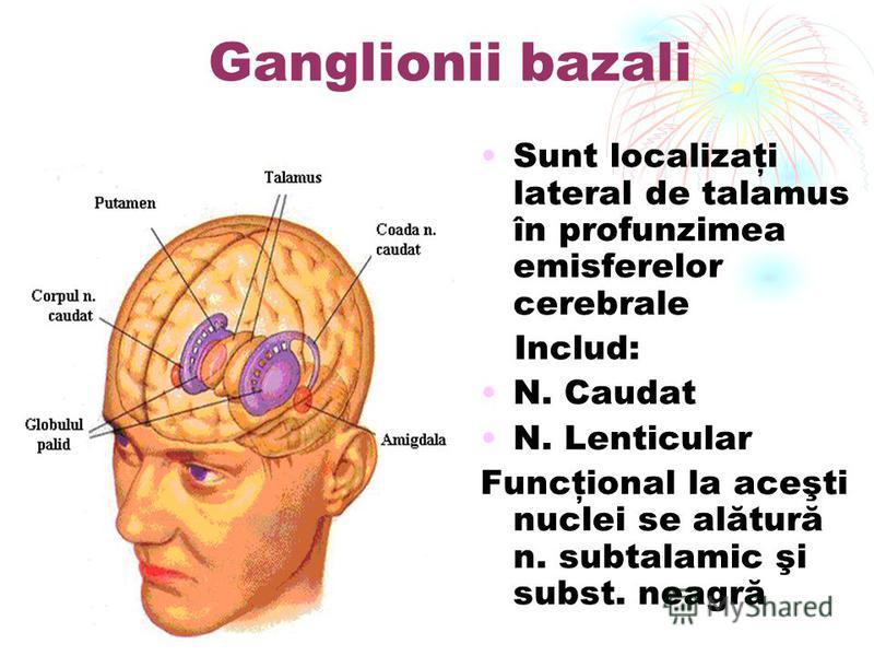 Ganglionii bazali Sunt localizaţi lateral de talamus în profunzimea emisferelor cerebrale Includ: N. Caudat N. Lenticular Funcţional la aceşti nuclei se alătură n. subtalamic şi subst. neagră