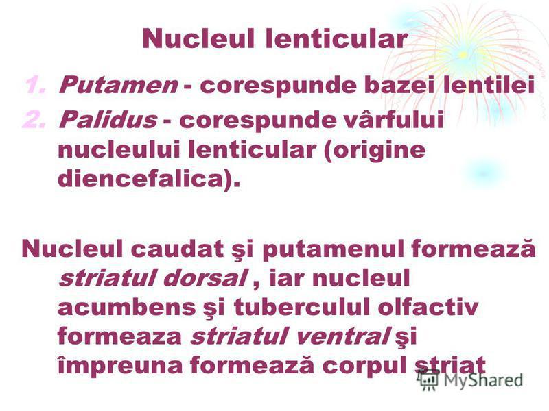 Nucleul lenticular 1.Putamen - corespunde bazei lentilei 2.Palidus - corespunde vârfului nucleului lenticular (origine diencefalica). Nucleul caudat şi putamenul formează striatul dorsal, iar nucleul acumbens şi tuberculul olfactiv formeaza striatul