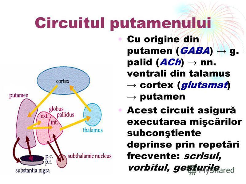 Circuitul putamenului Cu origine din putamen (GABA) g. palid (ACh) nn. ventrali din talamus cortex (glutamat) putamen Acest circuit asigură executarea mişcărilor subconştiente deprinse prin repetări frecvente: scrisul, vorbitul, gesturile