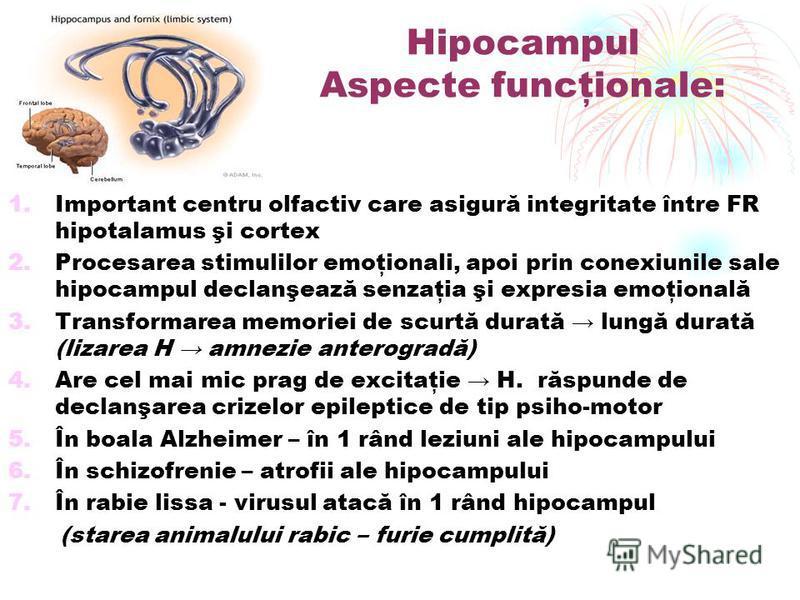 Hipocampul Aspecte funcţionale: 1.Important centru olfactiv care asigură integritate între FR hipotalamus şi cortex 2.Procesarea stimulilor emoţionali, apoi prin conexiunile sale hipocampul declanşează senzaţia şi expresia emoţională 3.Transformarea