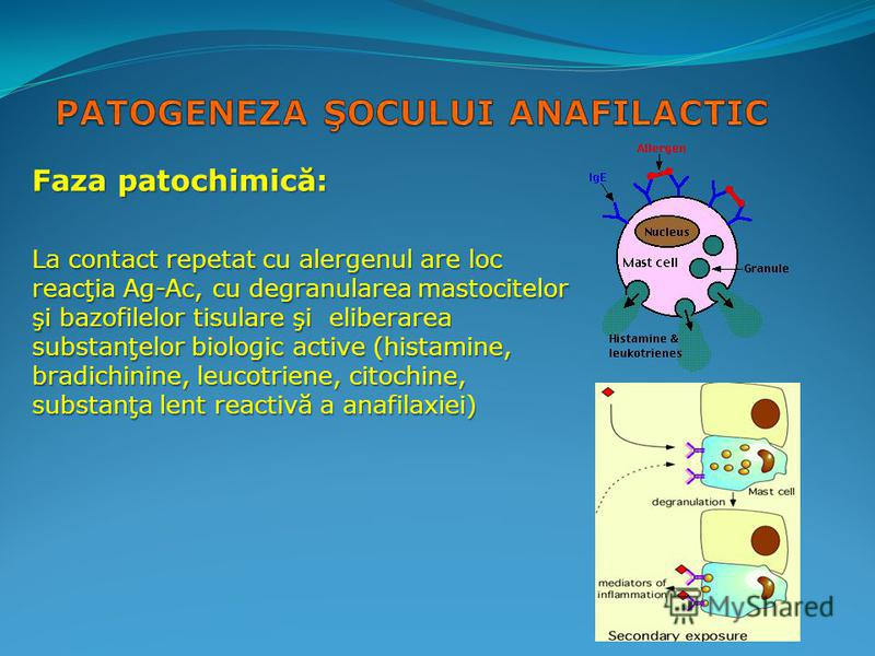 Faza patochimică: La contact repetat cu alergenul are loc reacţia Ag-Ac, cu degranularea mastocitelor şi bazofilelor tisulare şi eliberarea substanţelor biologic active (histamine, bradichinine, leucotriene, citochine, substanţa lent reactivă a anafi