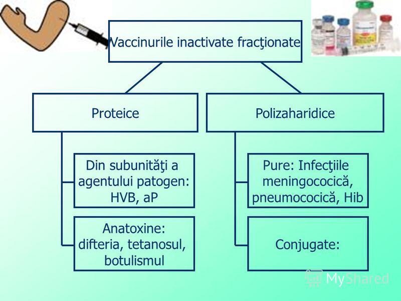 Vaccinurile inactivate fracţionate Proteice Polizaharidice Din subunităţi a agentului patogen: HVB, aP Anatoxine: difteria, tetanosul, botulismul Pure: Infecţiile meningococică, pneumococică, Hib Conjugate: