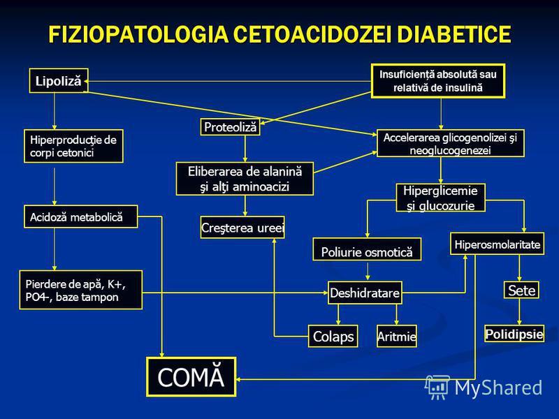 Lipoliză Hiperproducţie de corpi cetonici Acidoză metabolică Pierdere de apă, K+, PO4-, baze tampon Insuficienţă absolută sau relativă de insulină Accelerarea glicogenolizei şi neoglucogenezei Hiperglicemie şi glucozurie Poliurie osmotică Deshidratar