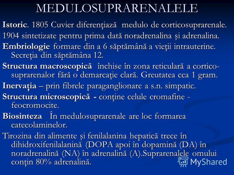 MEDULOSUPRARENALELE Istoric. 1805 Cuvier diferenţiază medulo de corticosuprarenale. 1904 sintetizate pentru prima dată noradrenalina şi adrenalina. Embriologie formare din a 6 săptămână a vieţii intrauterine. Secreţia din săptămâna 12. Structura macr